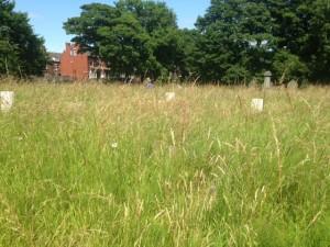 bramley war graves 4