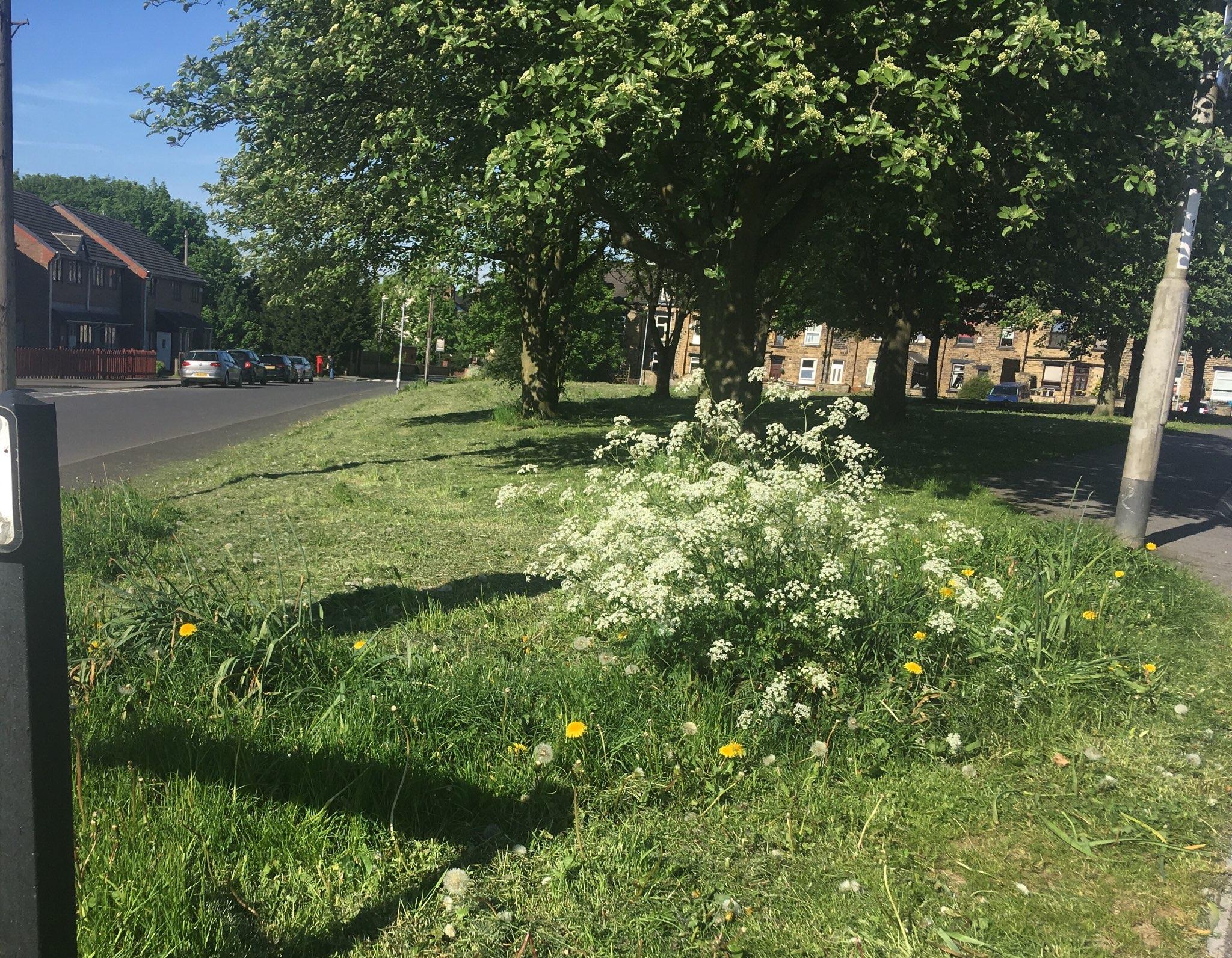 bramley grass cutting