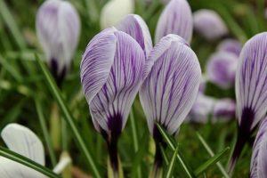 bramley park flowers 2
