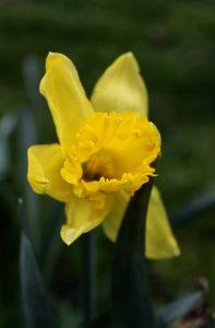 bramley park flowers 4