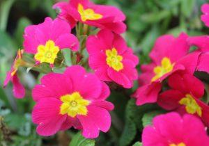 bramley park flowers 5